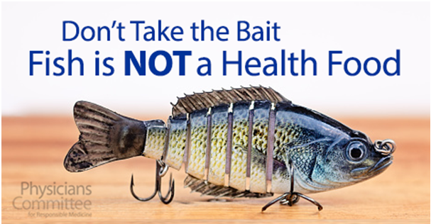 Four reasons why fish should not be considered a health food