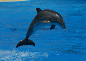 Romania is proposing a law recognising dolphins as rights holders.