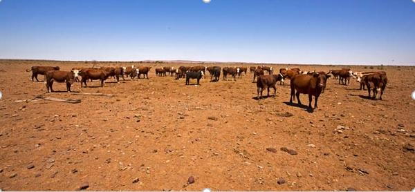 Moving to a Vegan Australia – Part 3
