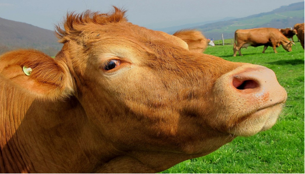 The Search for Sustainable Beef is over