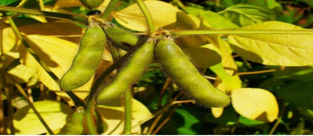 Part 1 – Global Soyabean Production
