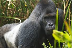 Unsustainable Fishing and Hunting for Bushmeat Driving Iconic Species to Extinction
