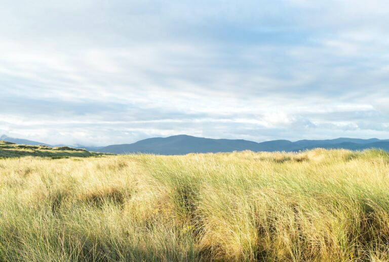 From Ecosystem Services to Interdependence with Nature