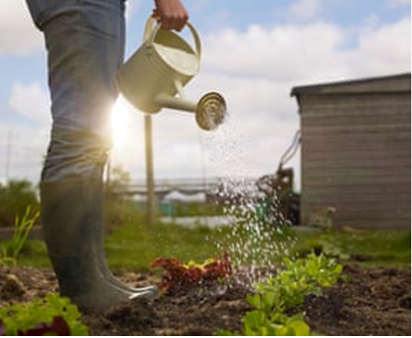 Green shoots: how veganism is changing gardening