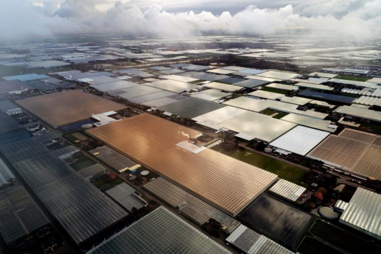 Dutch horticulture industry leads the world