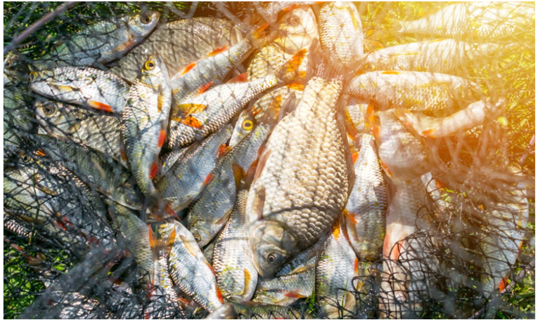 Is Eating Fish Good For You? The Truth About the Health and Environmental Impacts of Eating Fish