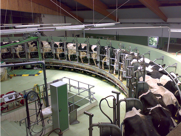3 ways to launch a Factory Farm Divestment Movement